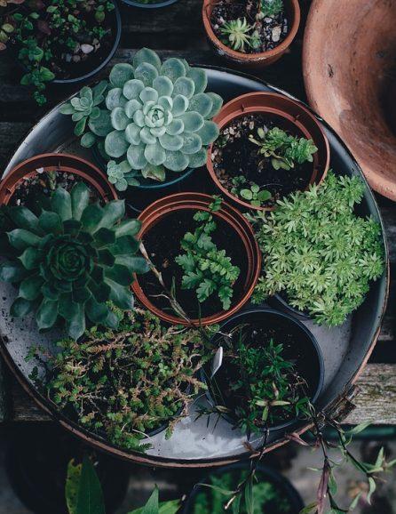 Plantas de interior, plantas fáciles de cuidar, cuidar un cactus, plantas crasas, siemprevivas, potus, árbol de Jade